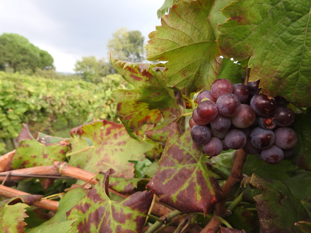 Etna wine tours