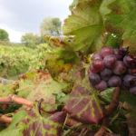 Blog_Wines of Sicily